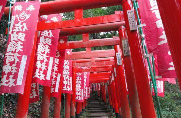Red toriis (gateways to a shinto shrine) on the approach to Sasuke-Inari