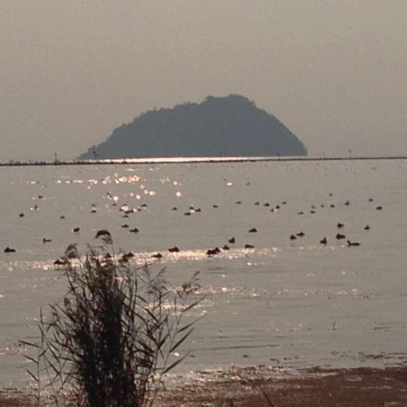 [Nov.] Chikubu-shima island (竹生島)