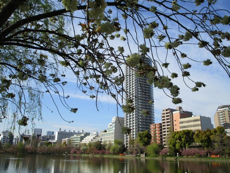 Ueno Park (April 14, 2019)