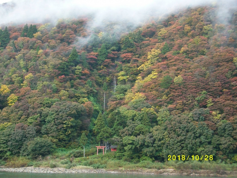 The Autumn Leaves Changing Colors Along the