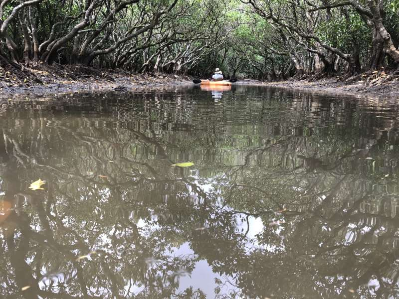 Canoeing at the 2nd biggest mangrove forest in Japan.