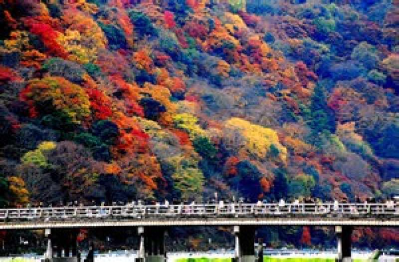 Autumn foliage will impress you ( Togetsu-Kyo bridge )