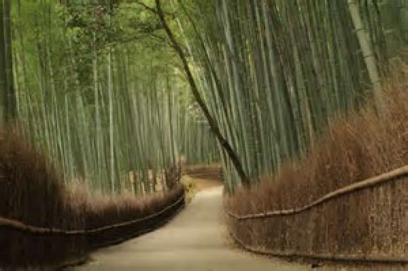 A magnificent road lined with green bamboo