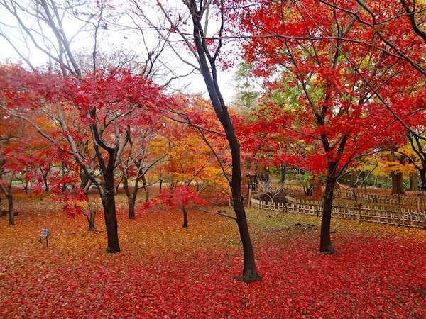 Beautiful colored leaves of trees in autumn at Jindai Botanical Gardens