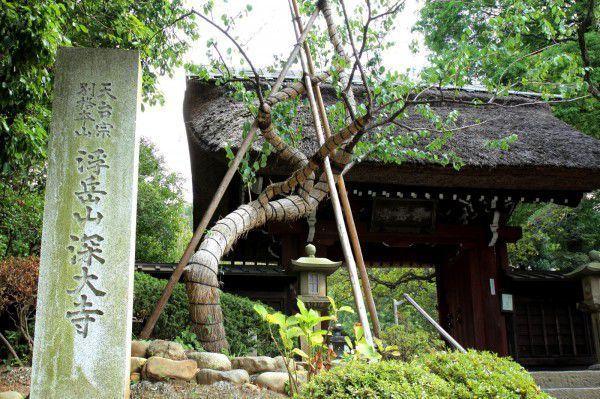 """""""Hidden gem"""" Jindaiji Temple of Tokyo"""