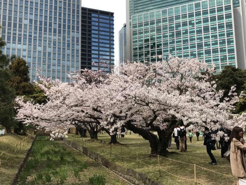 Hamariyu Garden