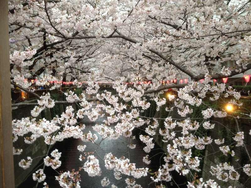 Cherry blossom viewing at Nakameguro