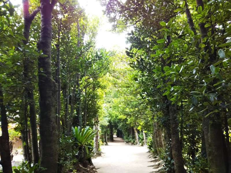 These Fukugi tree protect the local houses from strong wind, also during typhoon season.This beautiful walkaways is cleaned by residents every morning. While you are here, you feel okinawan relaxing time.