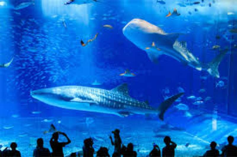 It is the fist aquarium in the world to keep whale sharks with the aim of captive breeding. Also you can see the school of manta rays. Most of all tourists visit this famous aquarium.