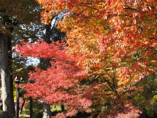 Beautifully changing colors of autumn leaves at Toji Temple
