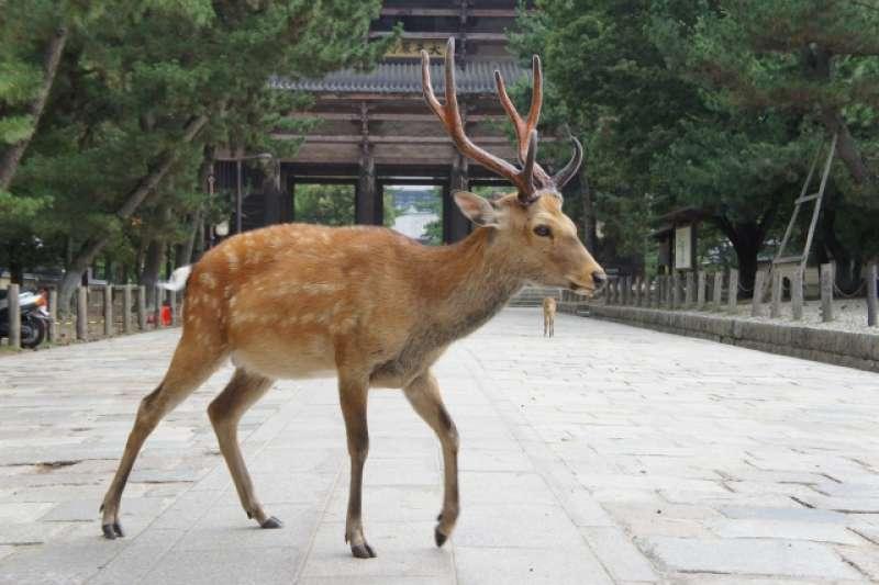 Deer in Todaiji