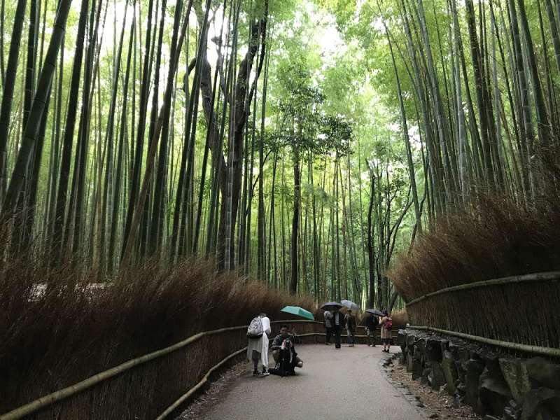 There are tens of thousands giant bamboo trees in a district of Arashiyama. Once you step there, deep fantasy atmosphere must capture your heart.