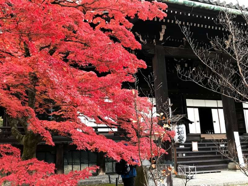 Shin-nyodo temple is nice through the year, but in November and early December crimson maple color is so terrific !