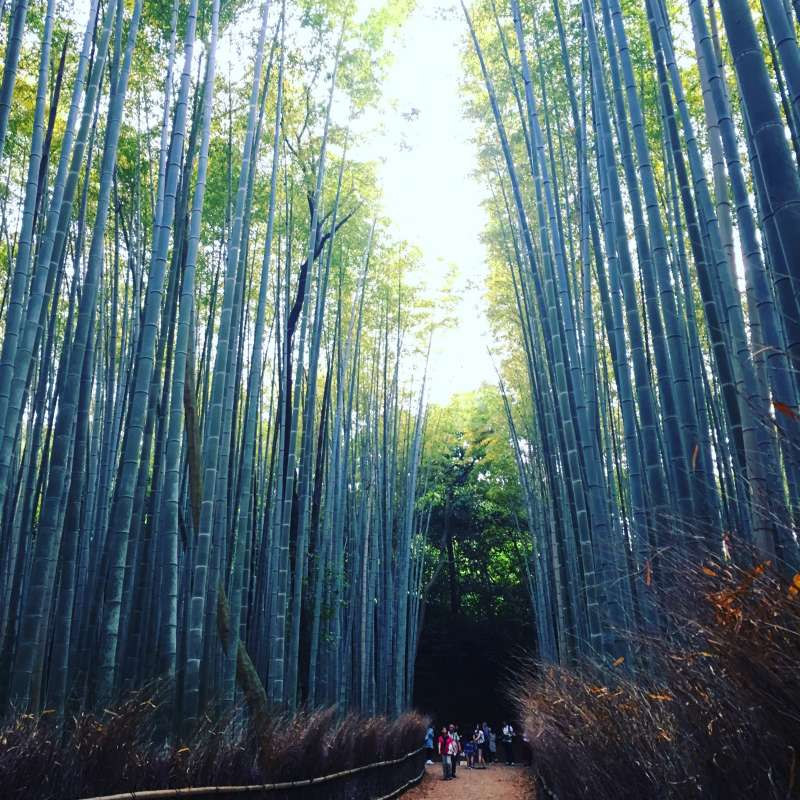 Feel fantastic atmosphere in the bamboo forest !