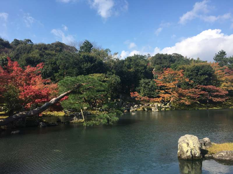 Tenryuji temple garden has a different flowers blooming every season.