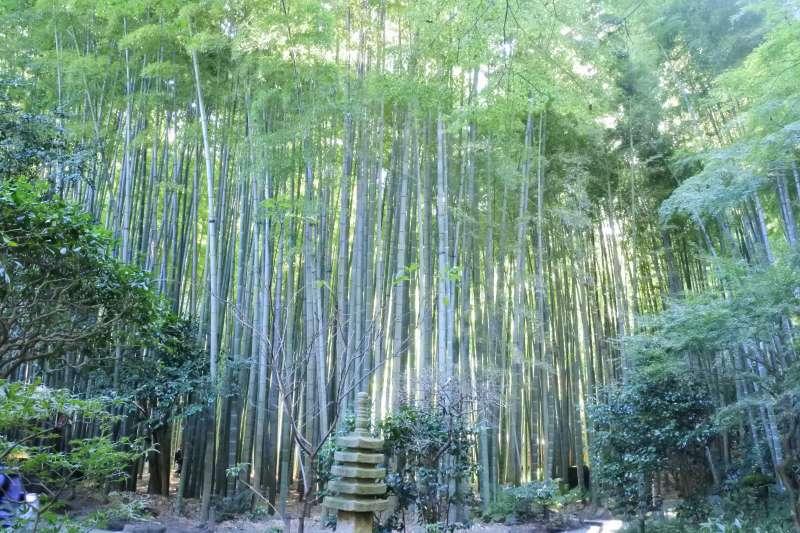 Bamboo grove at Hokokuji temple