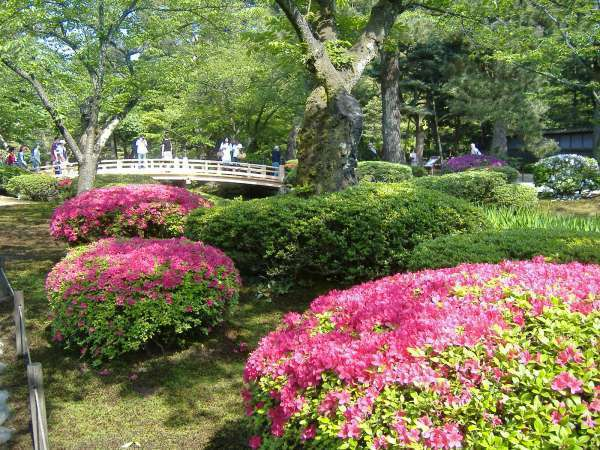 Azalia at Kenrokuen garden