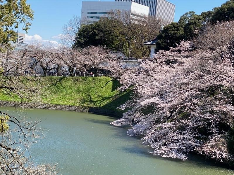 The Imperial Palace chidorigafuchi moat