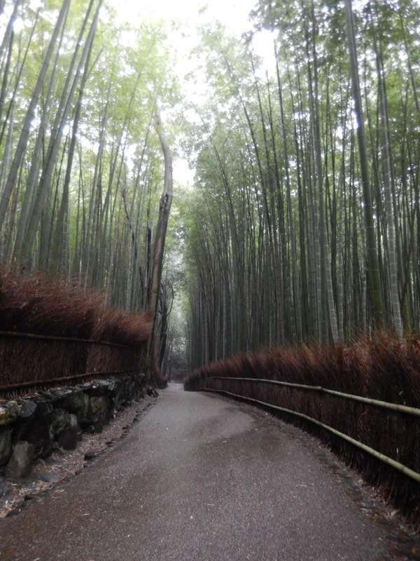 -Bamboo trail You can feel cool and be relax while walking if it is not crowed (^^);;