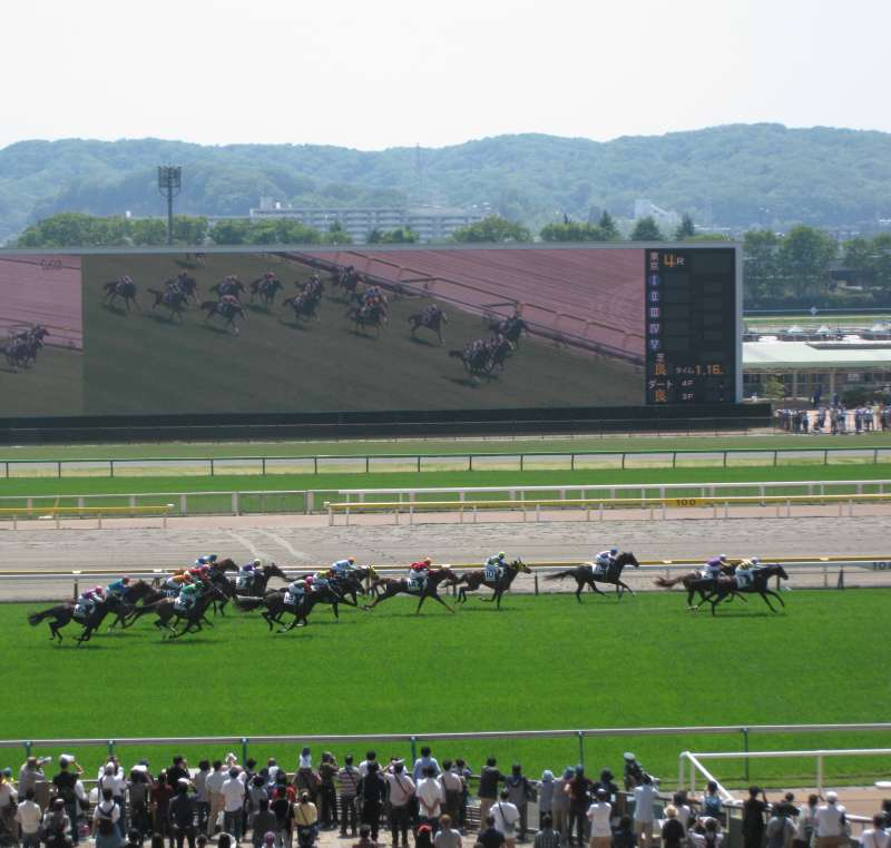 Horses in race and big screen.