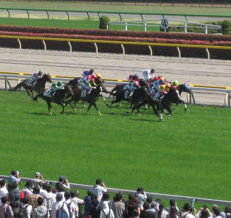 Horses in race.