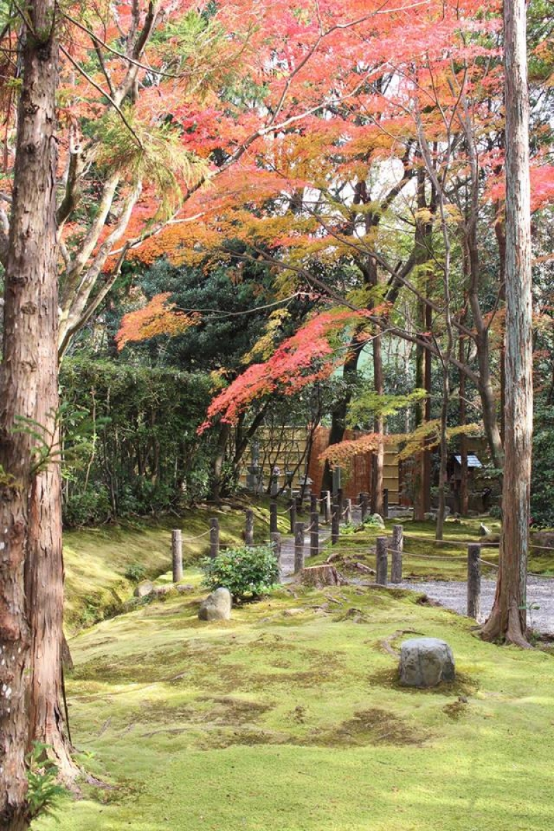 There are many beautiful gardens in Kyoto. I will introduce one of them.