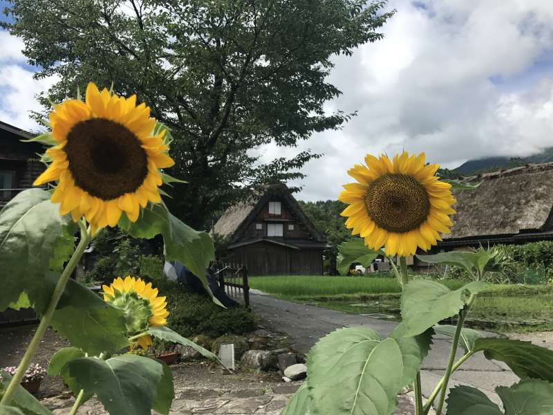 Summer in Shirakawago