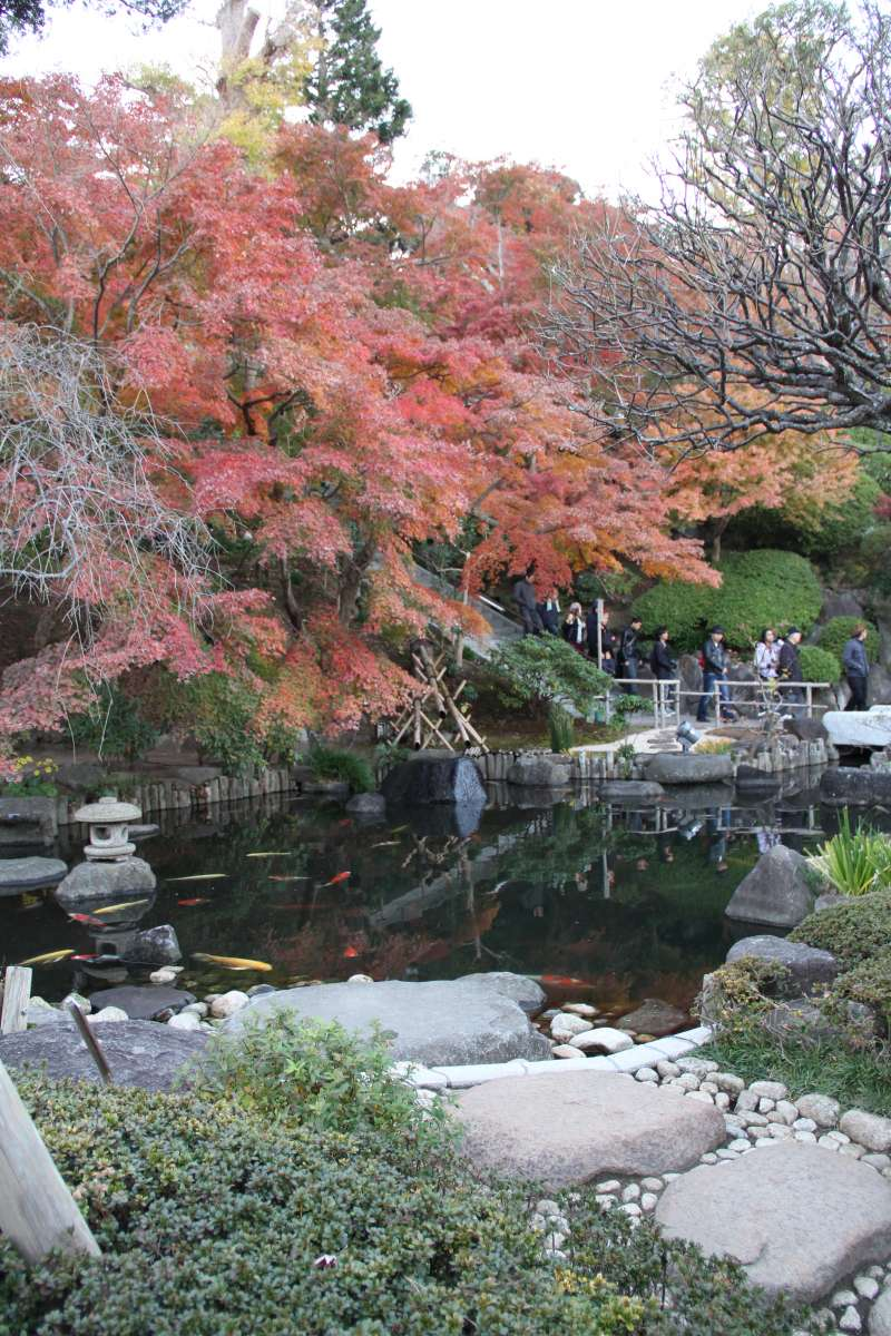 Colored leaves at Hase temple in October - December