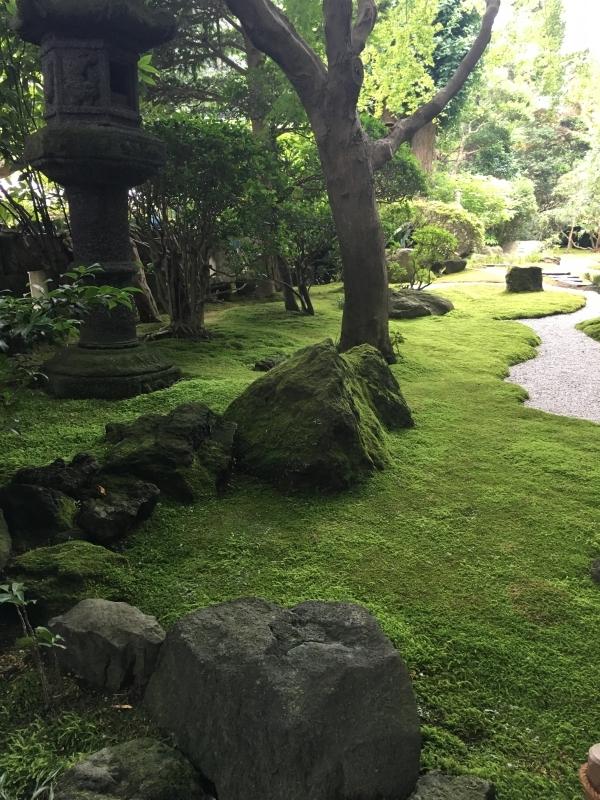 Moss covered garden