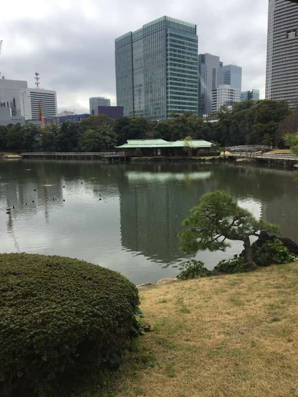 Hamarikyu garden is the former villa of Tokugawa shogun family. In Nakajima no chaya, they serve Japanese traditional powdered tea with beautiful Japanese sweets.