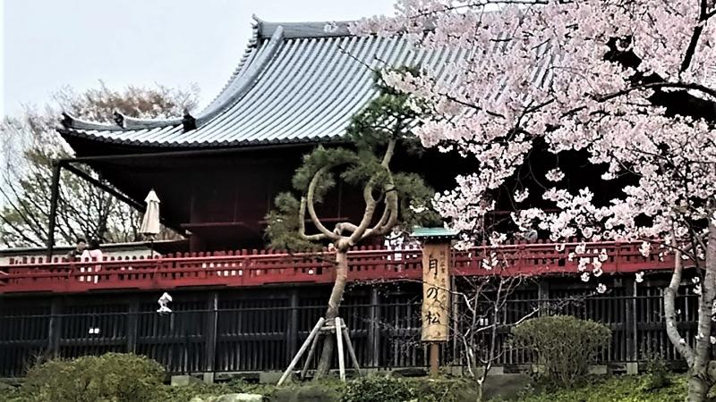 Kiyomizu temple in Ueno? Not in Kyoto?