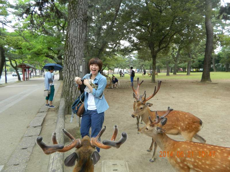 Nara Park (奈良公園) in Nara [1 of 2]