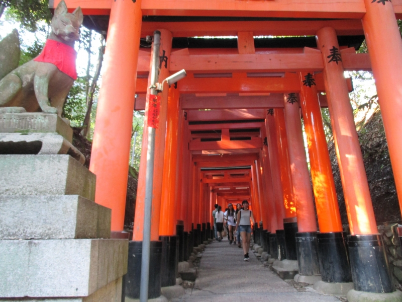 Fushimi Inari : A path leading to the top of the mountain