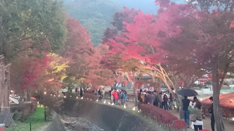 Red Leaves Corridor in Lake Kawaguchi