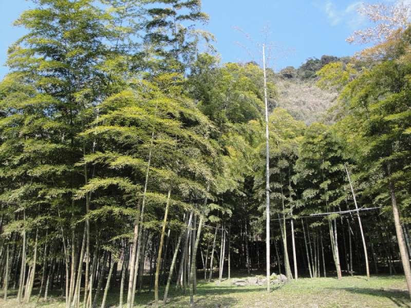 Bamboo forest in Senganen garden.