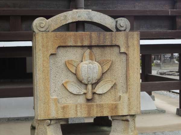 Tachibana or Mandarin Orange