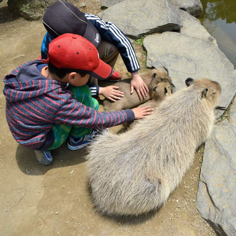 ★BIO PARK ・SAIKAI city Unique zoo and botanical garden, in the part of area can touch and feed animals.  200 types of animals and 1000 types of plants are exhibiting
