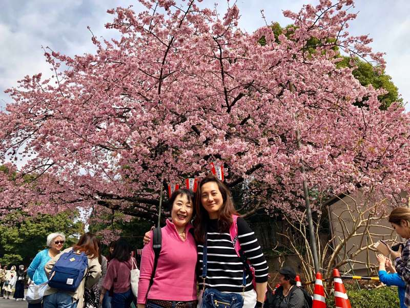 Ueno park, with beautiful cherry blossoms.