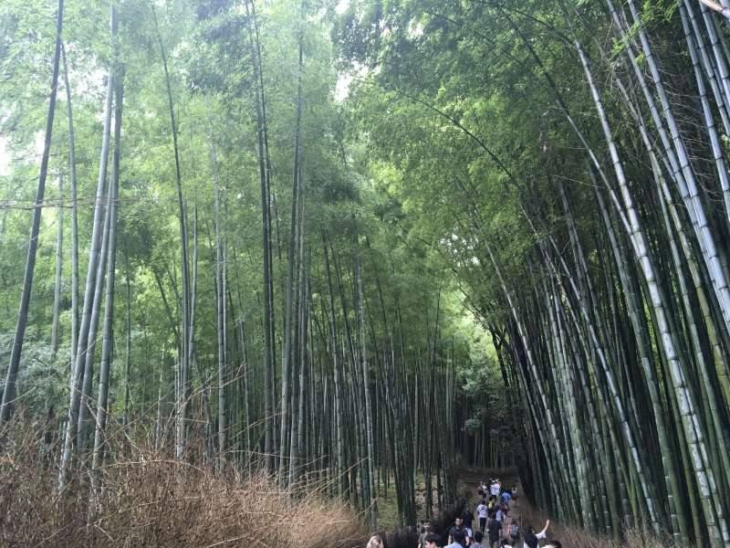 This bamboo pass is very popular among tourists for its tranquil atmosphere in Arashiyama. 