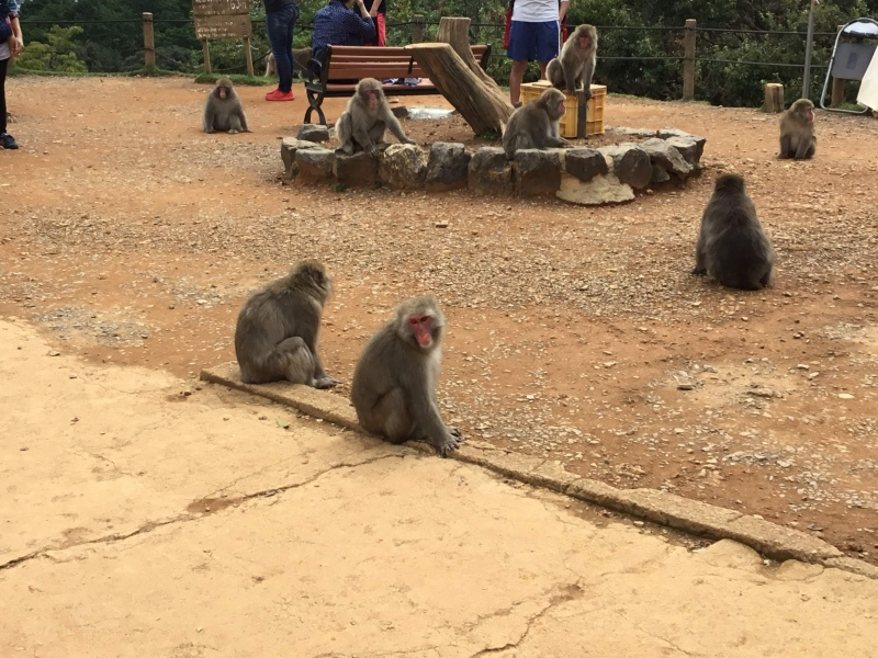 Iwatayama Monkey Park in Arashiyama. About 140 monkeys are living in this area. You can expect to surprise and excitement at seeing wild animals and feelings of joy in response to seeing baby monkeys running and hanging around. At the summit, you can find a resting area where you take relax on benches. There is also a great view of the surrounding city of Kyoto from 160 meters height . The entrance fee: JPY550 (adult)