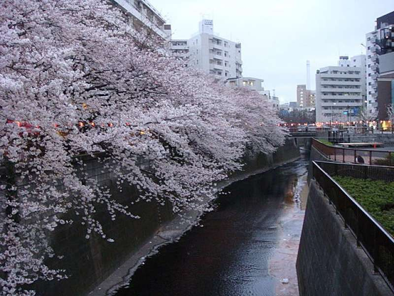 Famous for 800 cherry trees planted on the both sides. Also you can enjoy nice cafés or galleries along the river.