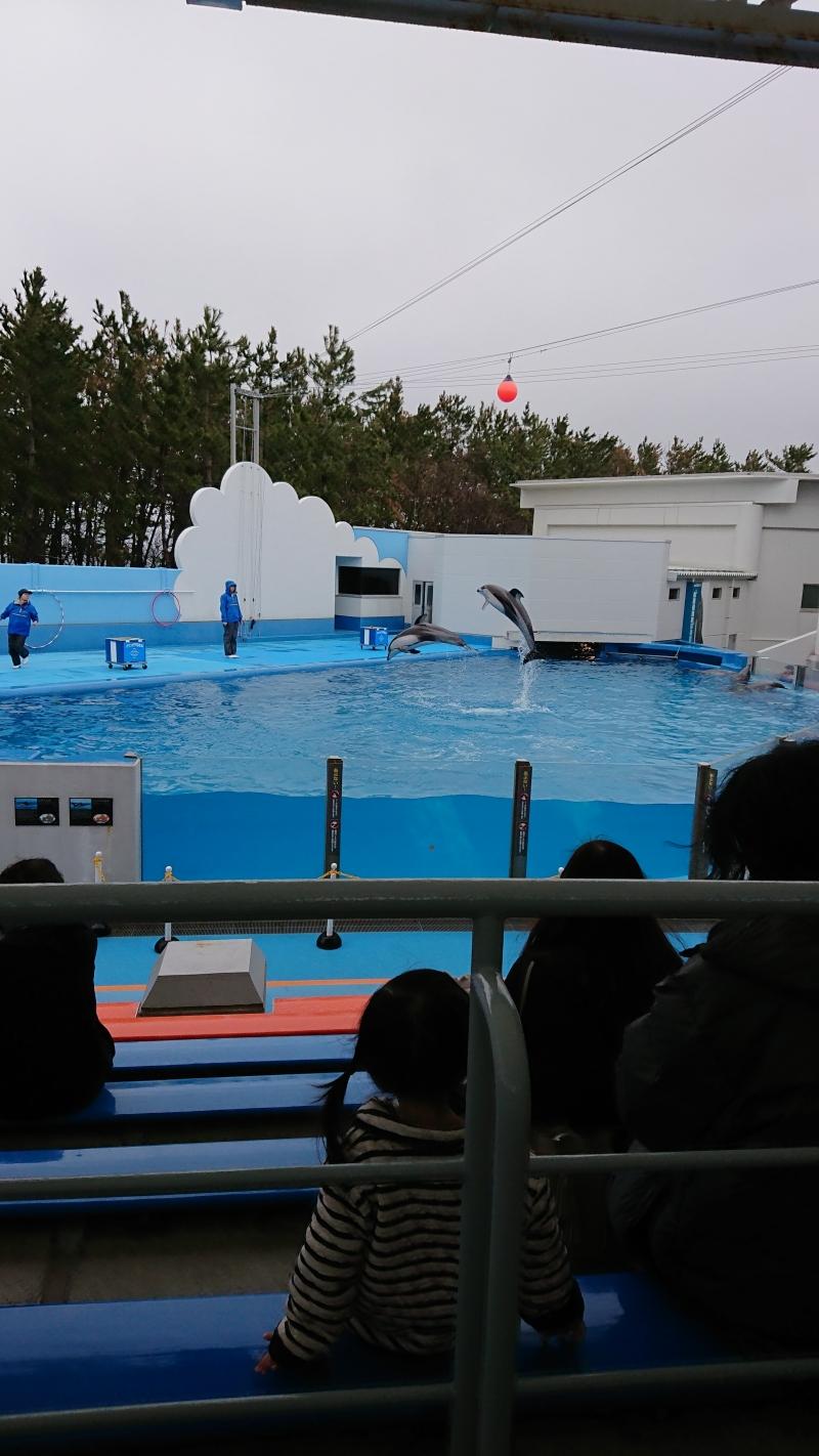 Dolphin Show at Marinepia