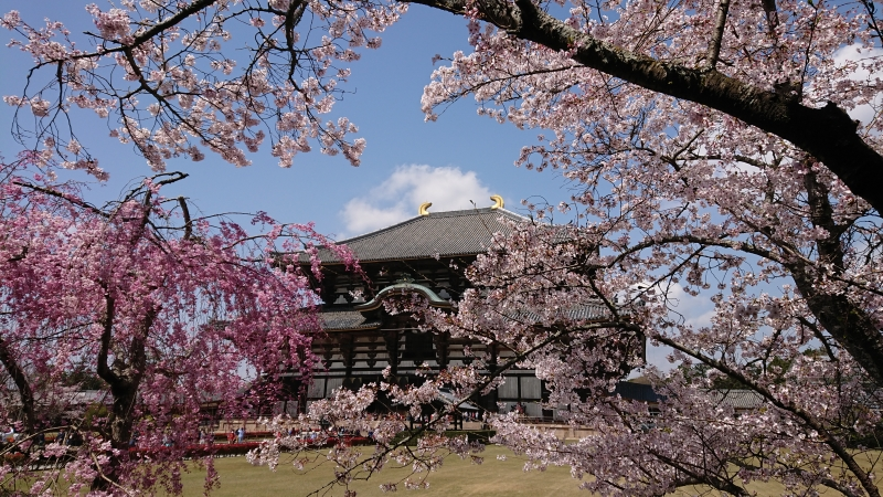 Must see spots in Kyoto and Nara in a day (7 hours)