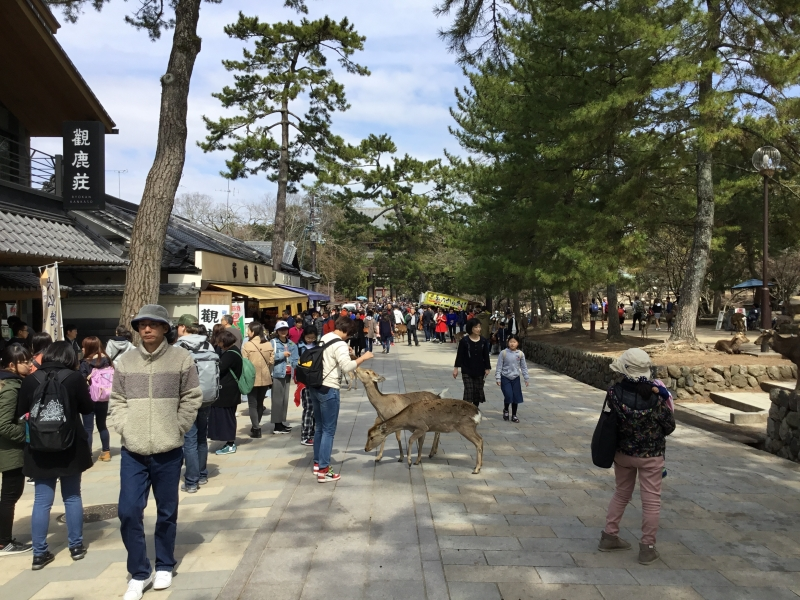 Nara park include Todaiji, Koufukuji, Kasuga-Taisha and Nara National museum.