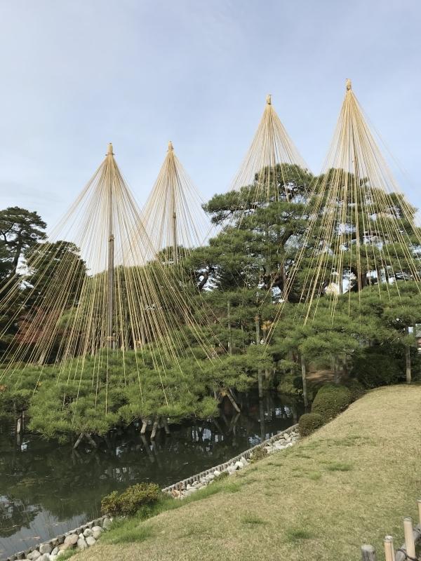Yukizuri in Kenrokuen garden