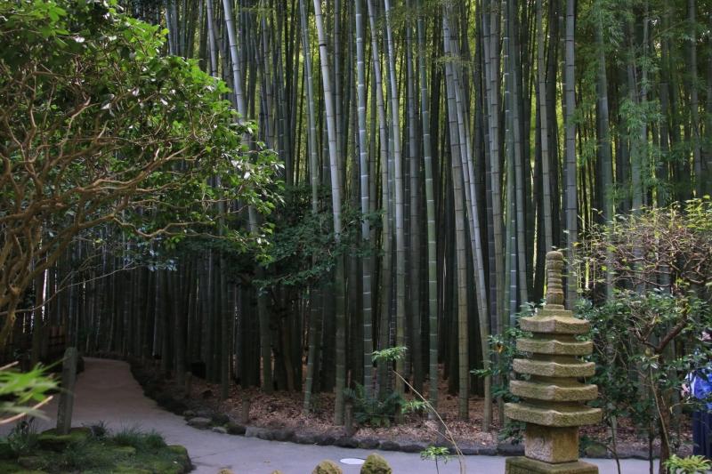 Bamboo Garden in Hokokuji Temple