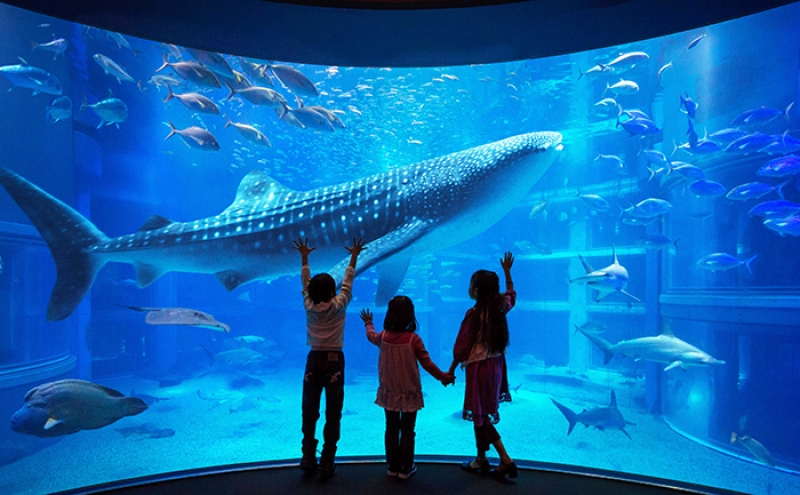 Osaka aquarium is the largest aquarium in both Japan and Asia.It must be a good experience  to seeing more than 30.000 fishes and 600spiecies!