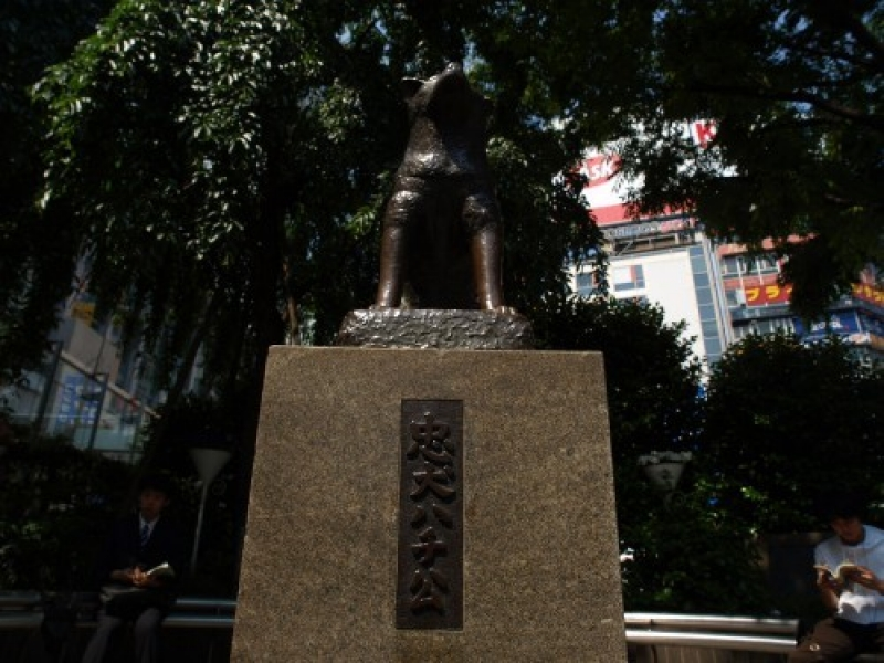 Hachi statue