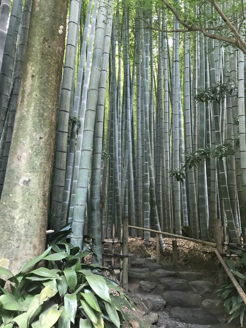 Hokokuji temple is well known for the beauty of bamboo trees.