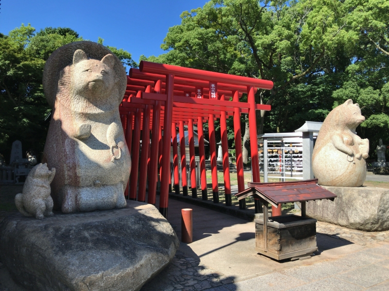 A raccoon statue and red torii gates in Yashimaji Temple